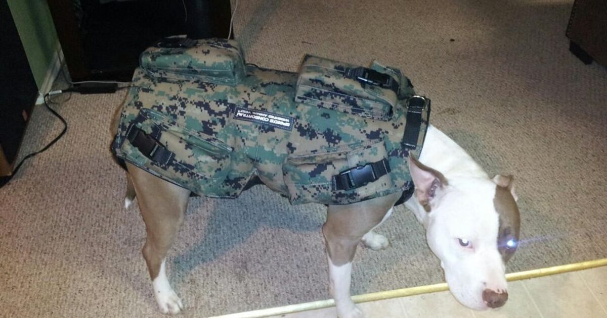 Why choose small dog weight vest?